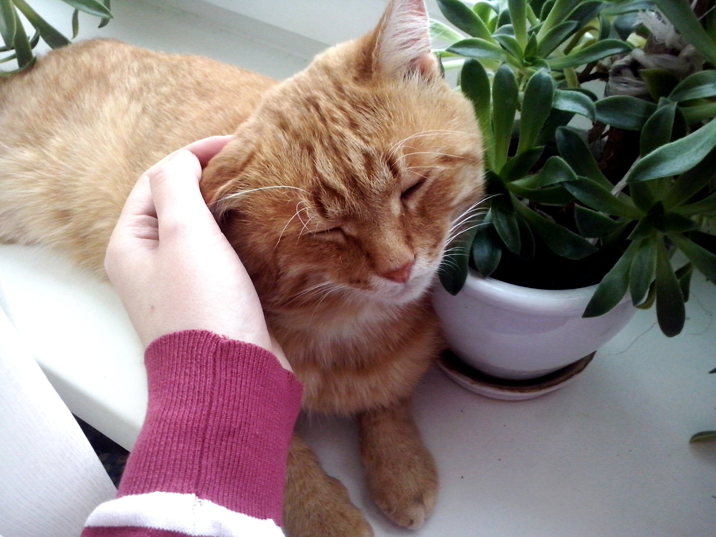 Therapy cats can be life-changing for people with mental illness