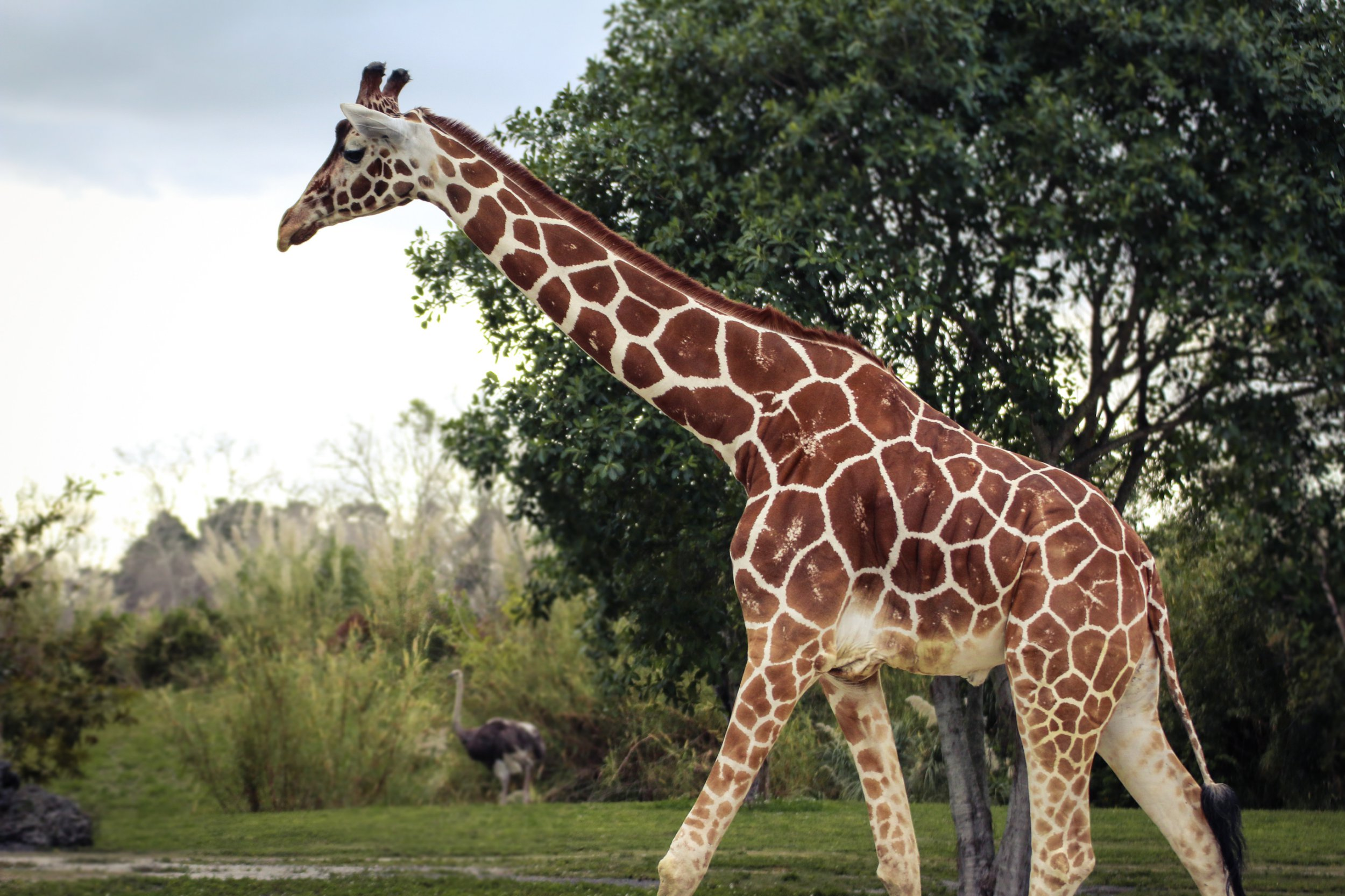 Giraffe dies at zoo after visitor tried to give it some food
