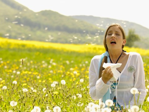 The best hay fever remedies, and when does hay fever season end?