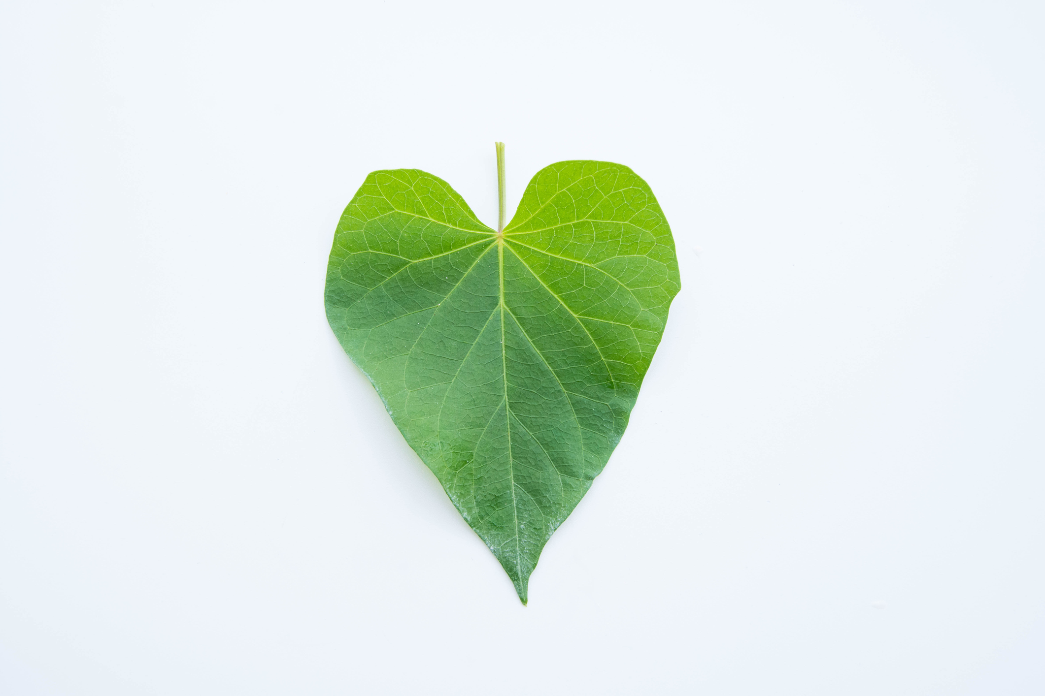 Why are people wearing green hearts? It's the #ShowTheLove campaign