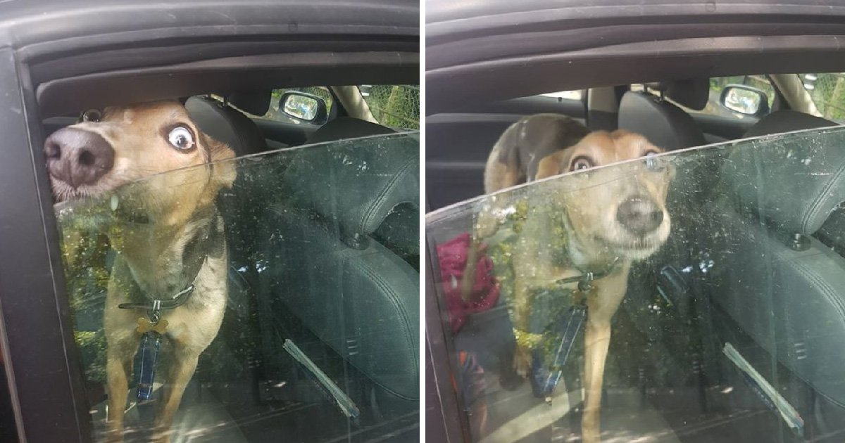 Dog was 'howling and crying' inside car on a hot day as owner went shopping