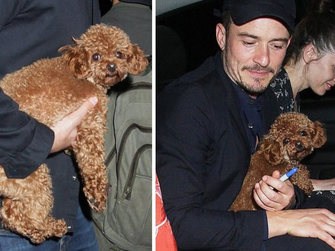 Orlando Bloom enjoys night out with pup Mighty at Killer Joe afterparty and no it's not Katy Perry's dog