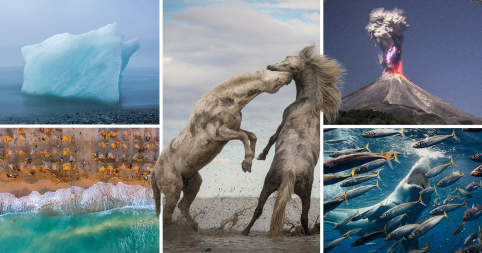 The winners of the 2018 The Nature Conservancy photo contest