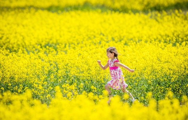 Maja-Isobel Lawson plays in a field of yellow flowers near Bretton in Yorkshire as a heat wave strikes parts of the UK. PRESS ASSOCIATION Photo. Picture date: Sunday May 27, 2018. Photo credit should read: Danny Lawson/PA Wire