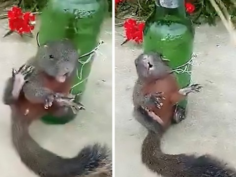 Outrage as farmer ties squirrel to beer bottle with wire and tortures it