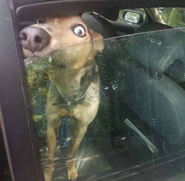 METRO GRAB - legalled and editorial decision to run - no permission Dog 'howling and crying' in car eyes in car park while owner went shopping No credit