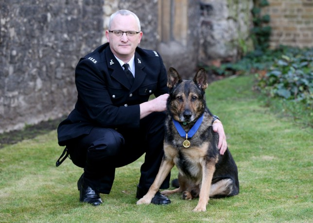 "File photo dated 14/03/18 of police dog Finn, with his PDSA Gold Medal, who has had Government bill ""Finn's Law"", named after him following his death which saw him brutally stabbed while protecting his handler from a knife-wielding suspect. PRESS ASSOCIATION Photo. Issue date: Friday June 15, 2018. Finn's Law will remove a section of the current law of self-defence often used by those who harm a service animal. See PA story ANIMALS Finn. Photo credit should read: Jonathan Brady/PA Wire"