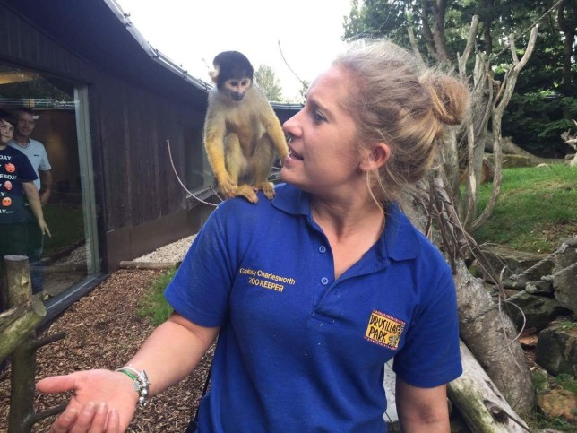 "Gabby Charlesworth with one of the squirrel monkeys at Drusillas zoo in East Sussex. Gabby Charlesworth has had a monkey named after her when she recently returned to work having defeated cancer. See National story NNMONKEY; A zoo has named its latest arrival after one of its young zookeepers who recently defeated cancer. Gabby the squirrel monkey's namesake is Gabby Charlesworth, 21, who rushed back to work after being given the all-clear by doctors treating her for for adrenal cancer. Drusillas in East Sussex said the bundle of joy was born on May 19. The squirrel monkey is one of Gabby's favourite animals, the park says. Gabby lost part of her kidney, aorta and diaphragm during an operation to remove a tumour the size of a mango on her adrenal gland seven months ago. She said: ""I have survived when many are not so lucky."