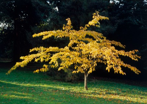 You can now use your placenta to plant a tree