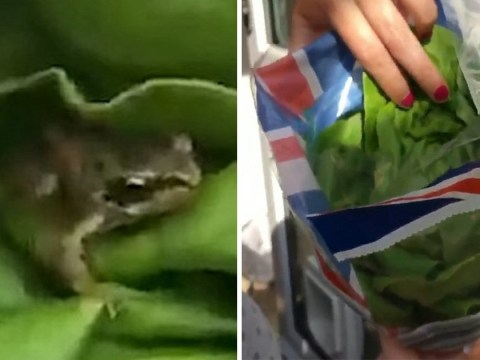 Woman finds live frog in lettuce she bought from Aldi