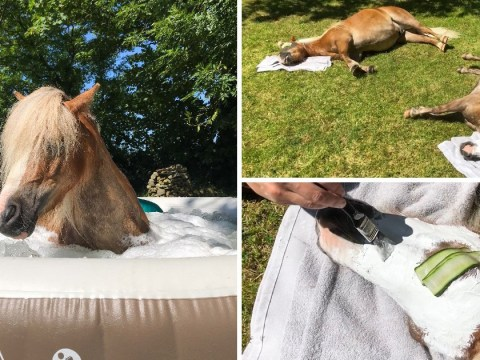 Ponies treated to face masks, mane blow dries and hot stone massages at horse spa