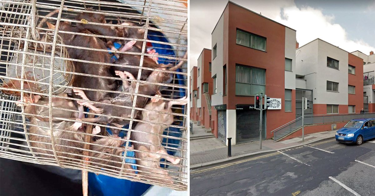 Rats 'the size of cats' running riot on estate as fears they make children ill