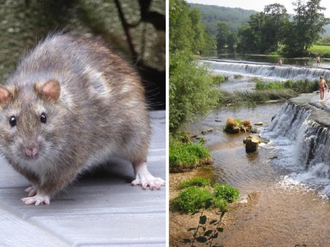 Rat urine in rivers and lakes could kill children going for a swim this summer