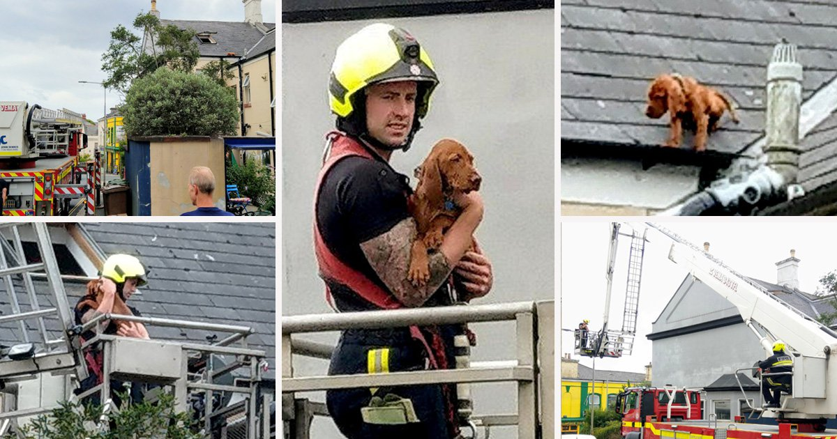 Heartwarming rescue of puppy stranded on a roof