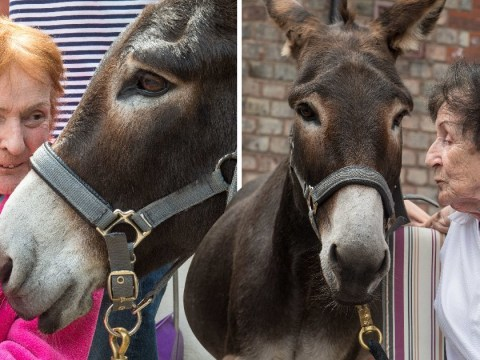 Meet Charlie, the donkey helping to buck up hospice patients