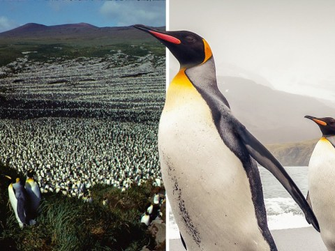 Mystery in the Indian Ocean as 90% of huge penguin 'super colony' disappears