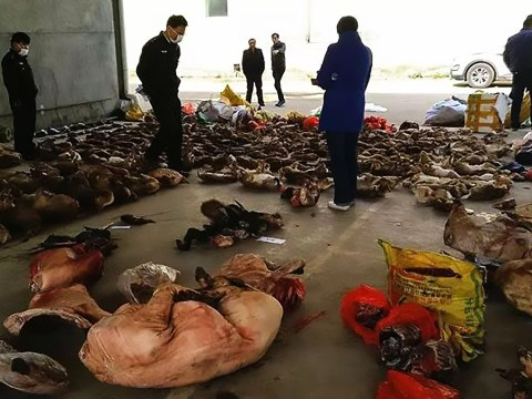 Officials seize 17,000 animal carcasses in wildlife trafficking raids