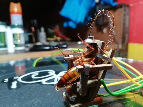 Some monster caught a cockroach and executed it on a home-made mini electric chair