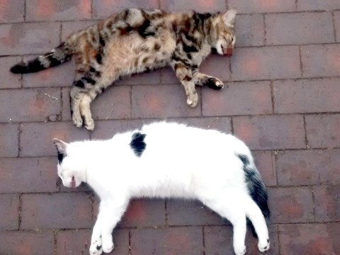 Cats found dead near tower block 'were thrown from the 13-storey building'