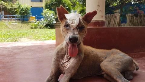 UK vet Janey Lowes saving lives of Sri Lanka's street dogs