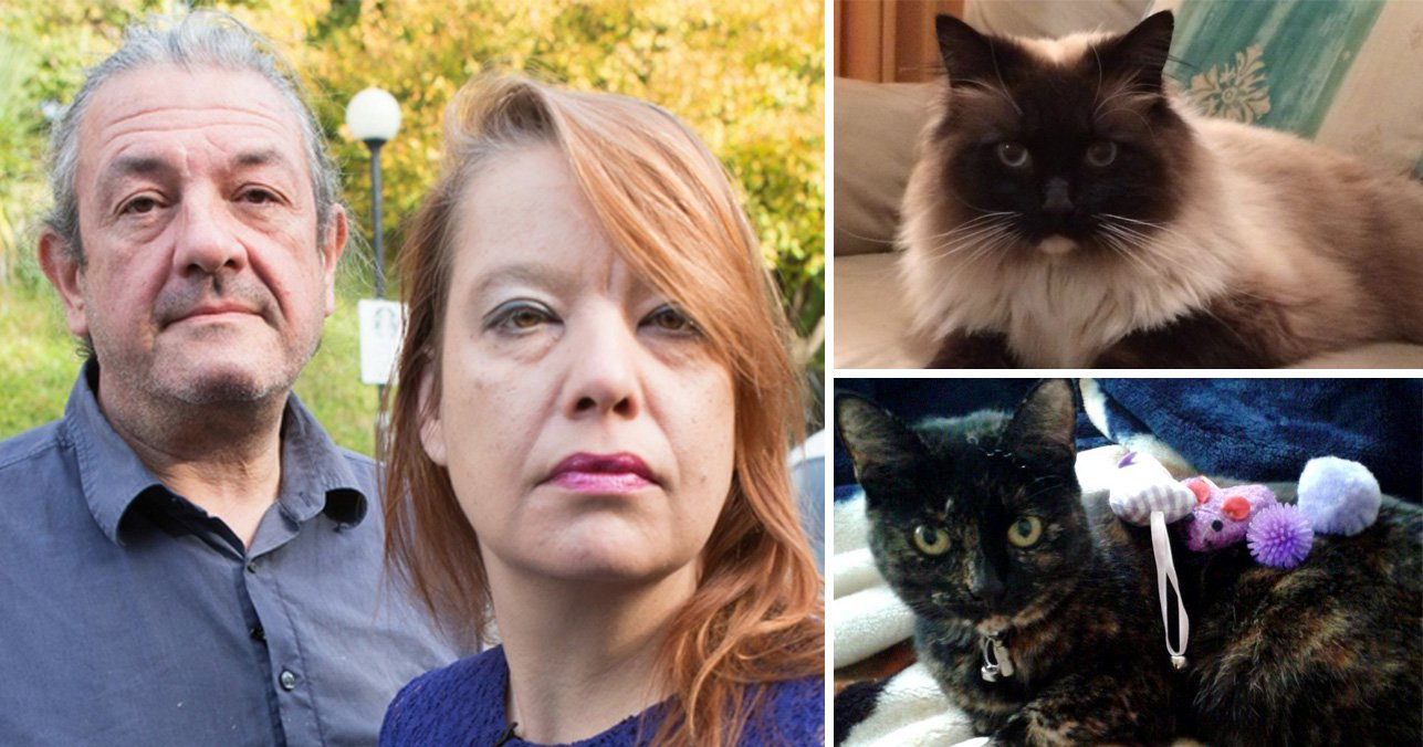 Man leading search for Croydon Cat Killer thinks it could be a journalist