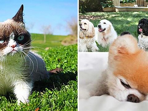 These pets are richer than Kim Kardashian