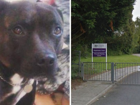 Boy, 14, kicked dog to death after 'losing his temper'