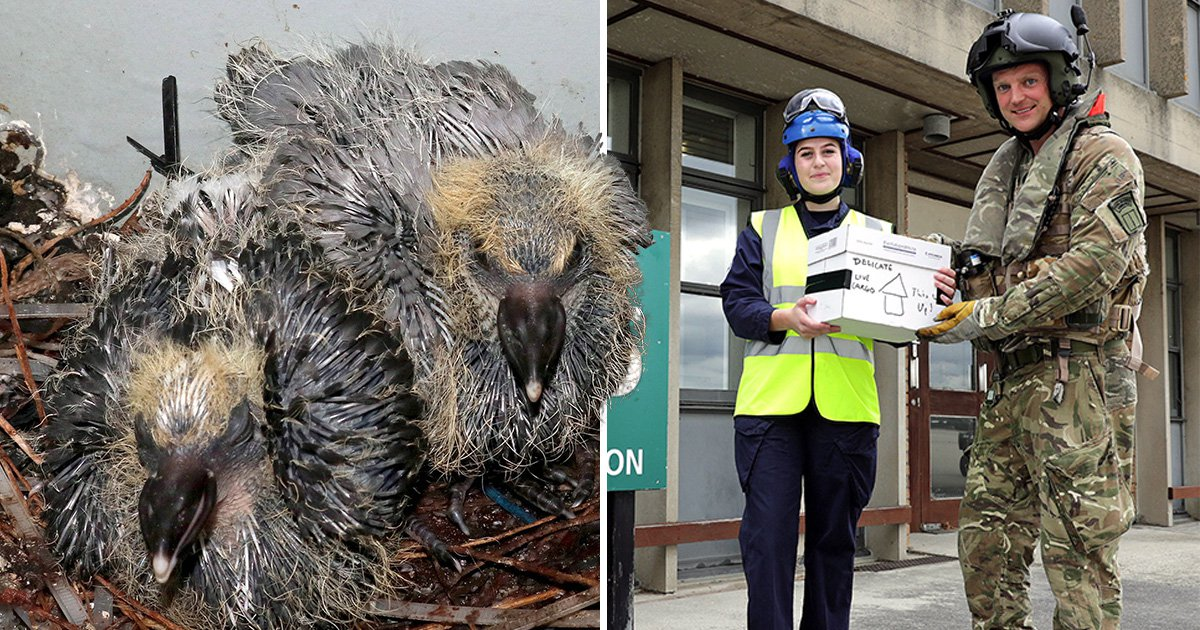 Baby pigeons flown home to UK after sneaking onto Royal Navy's brand new £3,000,000,000 ship