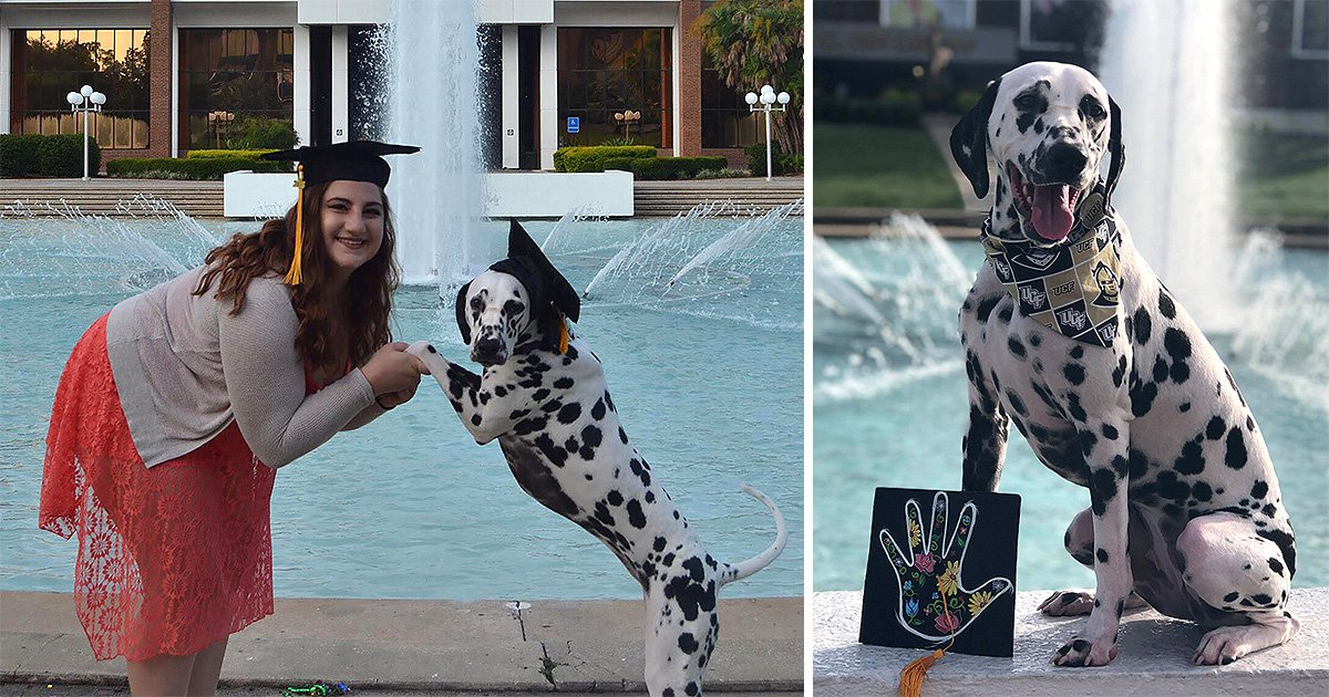 Service dog receives her very own graduation cap and photoshoot