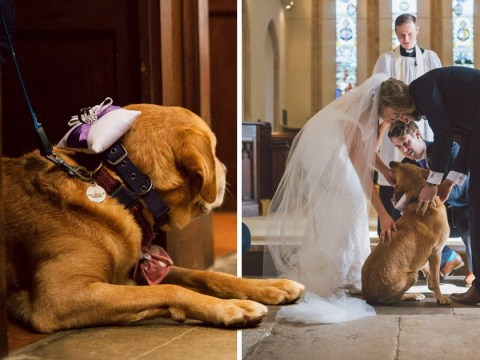 Duke the very good dog was the perfect ring bearer at his owners' wedding