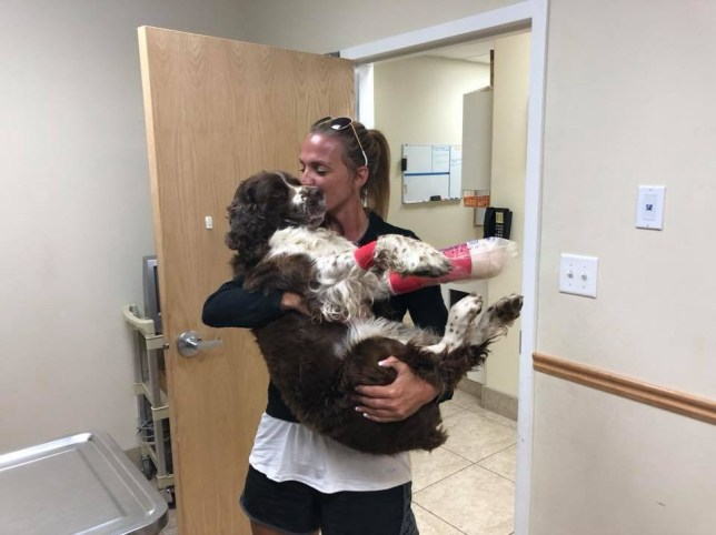 Tia Vargas in Idaho has given a dog named Boomer the happily ever after he deserves, by adopting him into her family after rescuing and carrying the lost and injured 55-pound pup down a 11,106-foot mountain.