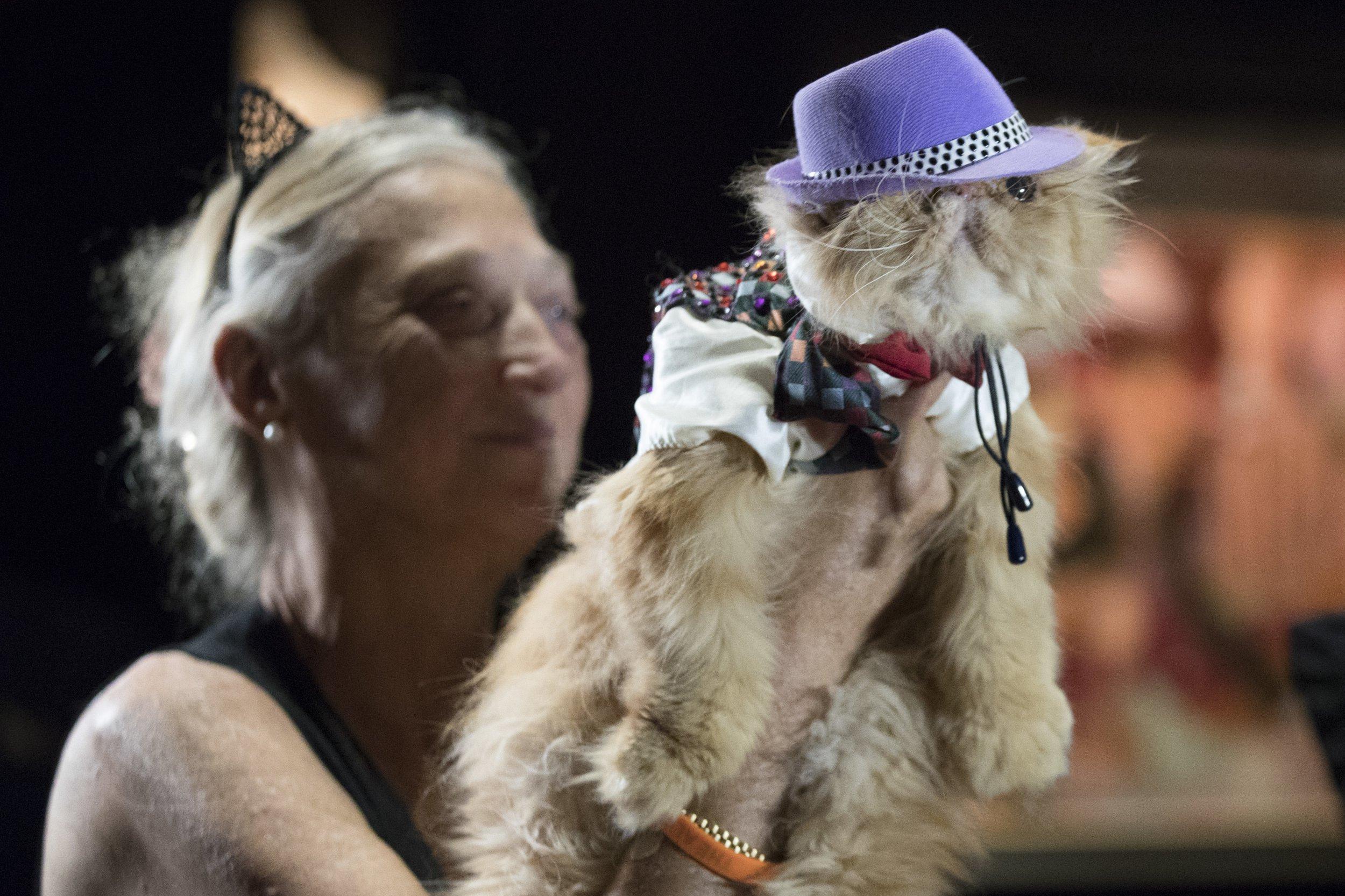 'Mewdels' own the catwalk in a feline fashion show