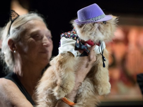 'Mewdels' own the catwalk in a feline fashion show
