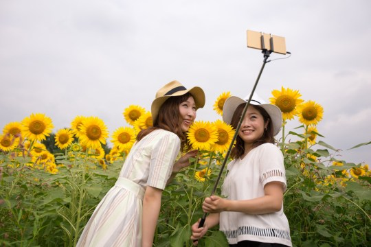 Happy young women taking selfie picture in sunflower field