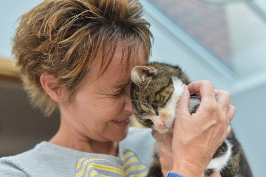 Boo the tabby cat (17) is reunited with her owner Janet Adamowicz after going missing for 13 years since 2005, pictured at home near Harrogate, North Yorks. See Ross Parry story RPYCAT; An elderly moggy has finally found its way home after becoming a stray for 13 YEARS. Janet Adamowicz was left heartbroken when her beloved tabby cat called Boo, an ageing 17-year-old feline, disappeared unexpectedly in 2005. The married step-mum-of-two plastered missing posters of Boo to lampposts in Harrogate, West Yorks., and put an advert in the local paper. But after a year Janet gave up hope and eventually decided to three-legged Ollie in 2008 and Tessie in 2014. So after the 17-year-old moggy was brought in to a local vet's after being found mysteriously 40 miles away in Pocklington, East Yorks., it was more than just a shock.