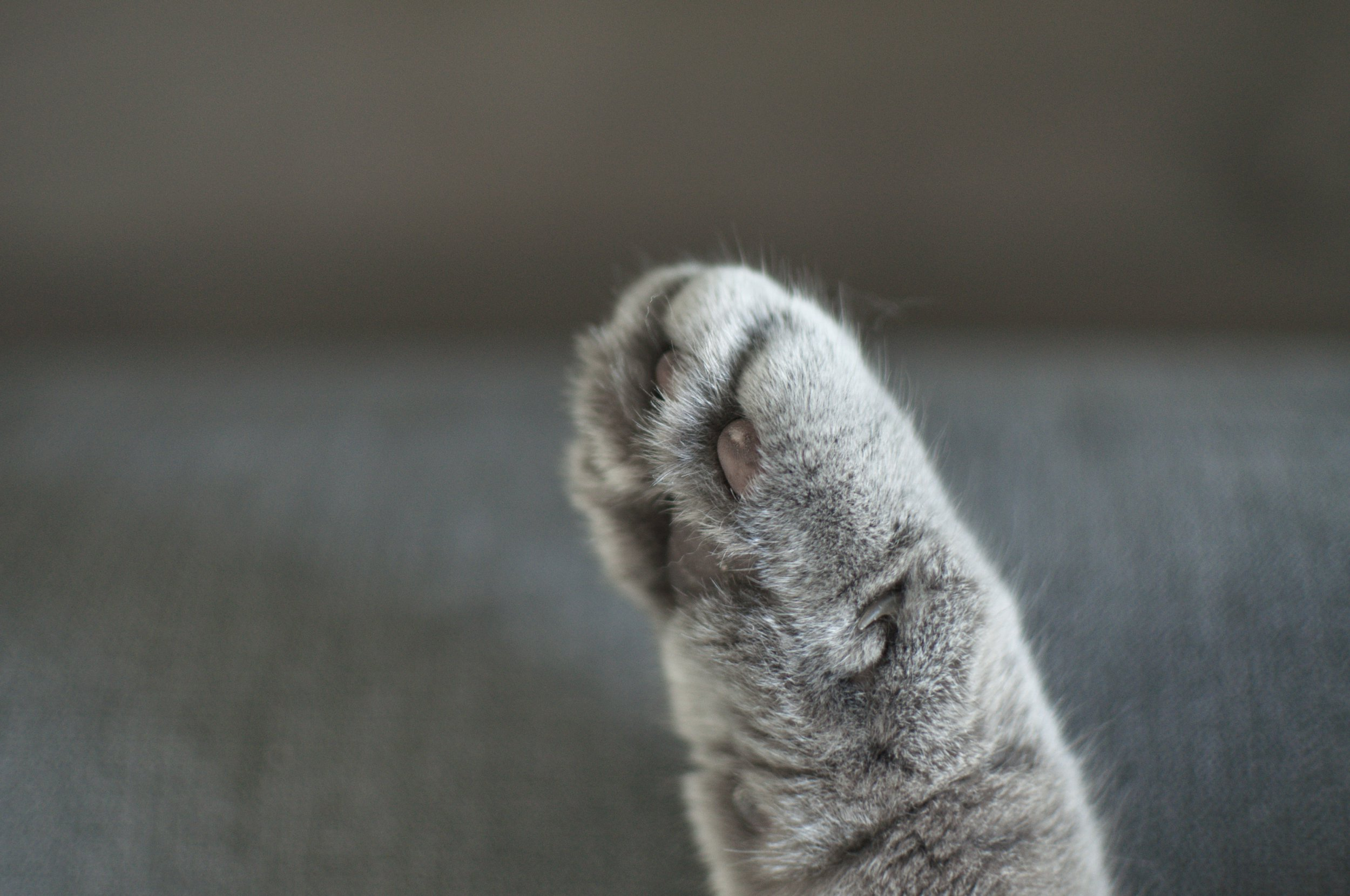 How to trim your cat's claws safely