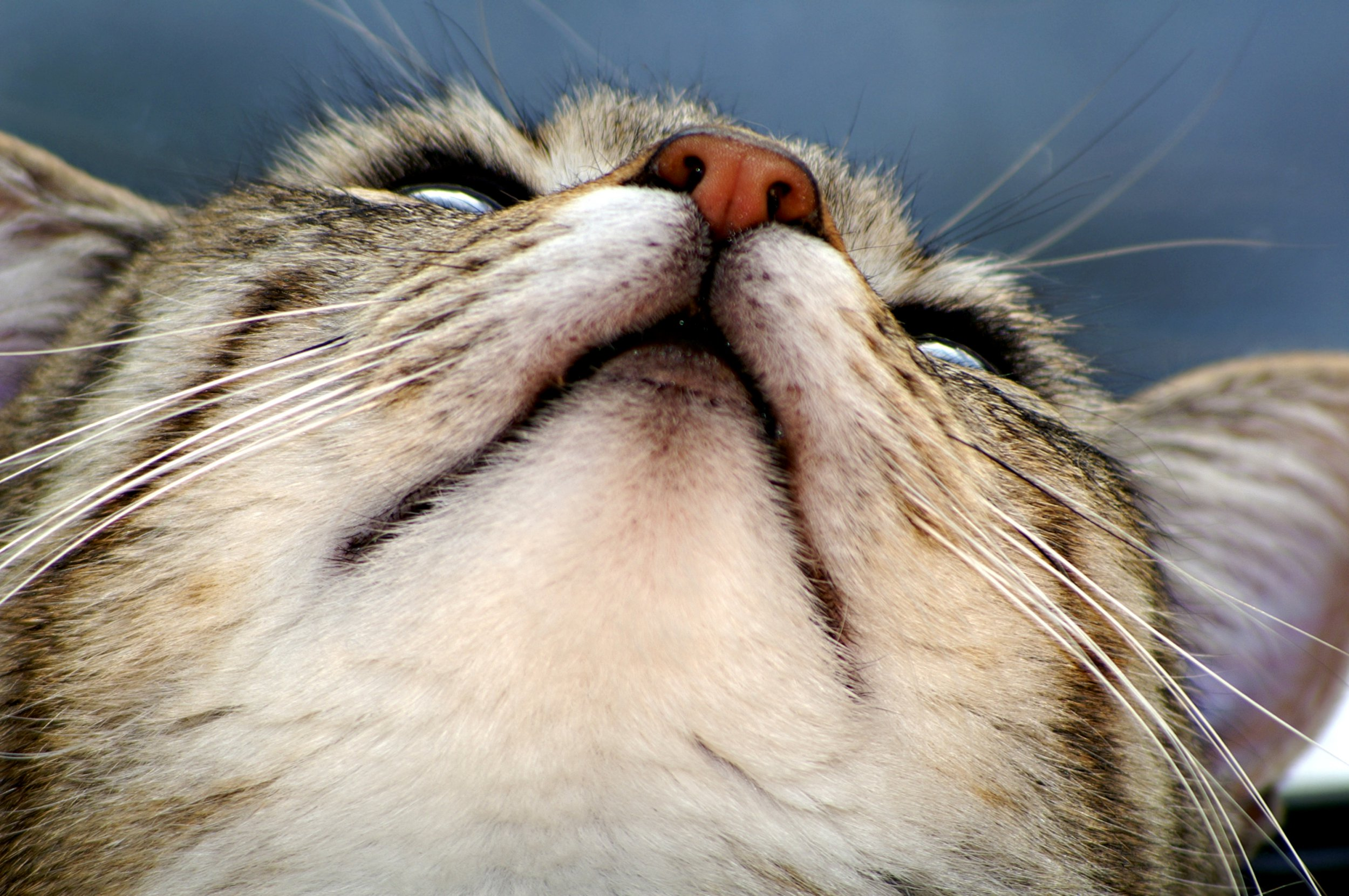 Cat from beneath; Shutterstock ID 1030763; Purchase Order: -