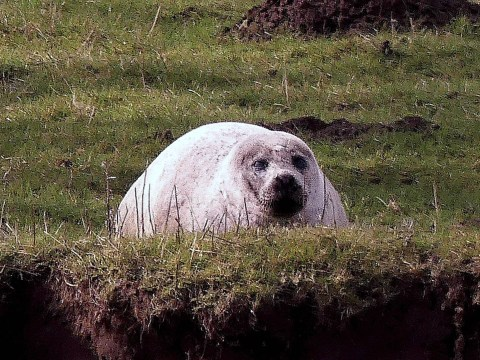 Seal dies after getting lost 50 miles inland in Yorkshire Dales
