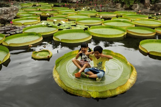 Children pose for a photo on a giant waterlily leaf during an annual leaf-sitting event in Taipei, Taiwan August 16, 2018. REUTERS/Tyrone Siu
