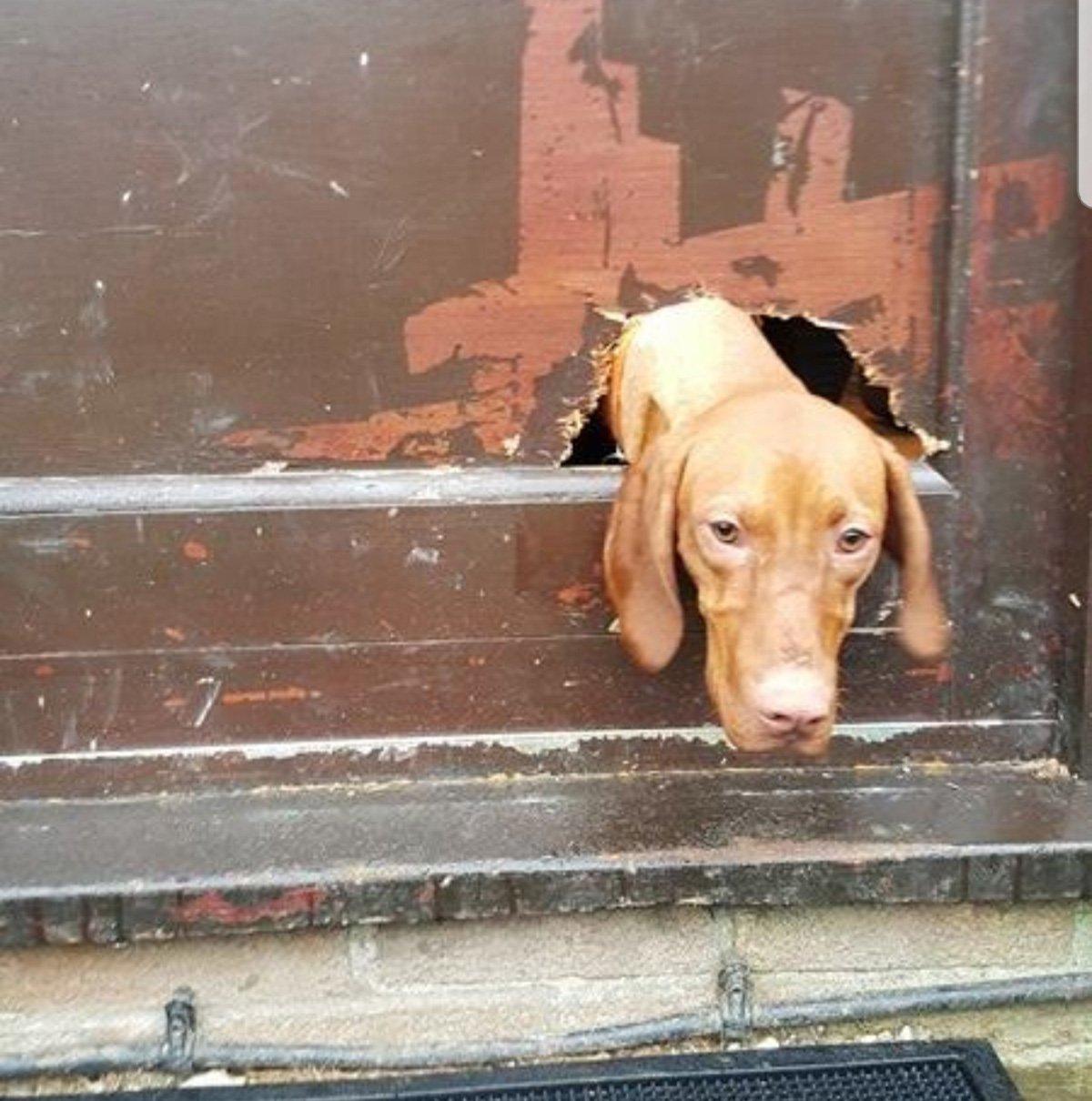 Britain's naughtiest pets revealed