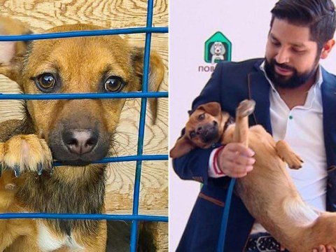 Football fan returns to Russia to rescue stray dog he met at World Cup