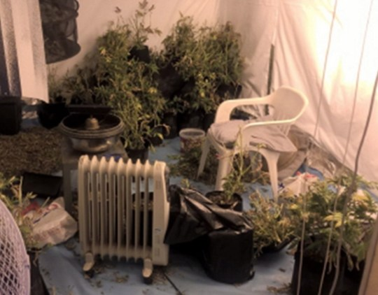Pictured: Photos from inside Mark Colwell's home in Portchester. A man caught growing ?35,000 worth of cannabis has avoided jail after telling a court he was going to smoke it all himself. Police discovered 38 plants set up under lights in Mark Colwell's home which he had rewired to avoid paying for the electricity his 'cottage industry' needed, the court heard. However, Colwell told officers he smoked up to an ounce of marijuana per week, and was growing his own to 'cut costs' after racking up debts. The 35-year-old was growing the plants using a hydroponics system in his ?200,000 semi-detached home in Portchester, near Portsmouth, Hants. SEE OUR COPY FOR DETAILS. Please byline: CPS/Solent News ? CPS/Solent News & Photo Agency UK +44 (0) 2380 458800