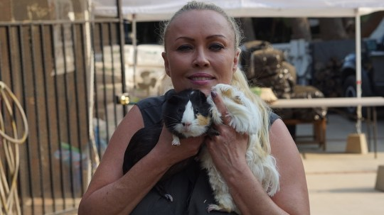 *** EXCLUSIVE - VIDEO AVAILABLE *** CHATSWORTH, CA - JULY 06: Founder of the guinea pig sanctuary Saskia Chiesa cuddles two of the guinea pigs on July 06, 2018 in Chatsworth, California. A woman has dedicated her life to caring for hundreds of adorable guinea pigs. Saskia Chiesa, 49, set up Los Angeles Guinea Pig Rescue 20 years ago in Chatsworth, California. After discovering that there was no place for rescued guinea pigs to go in LA, Saskia knew she had to set up her own to save her spirit animal. The guinea pig lover expected to start slowly but she found herself with 20 guinea pigs with health problems within the first month. PHOTOGRAPH BY Bart Vandever / Barcroft Images