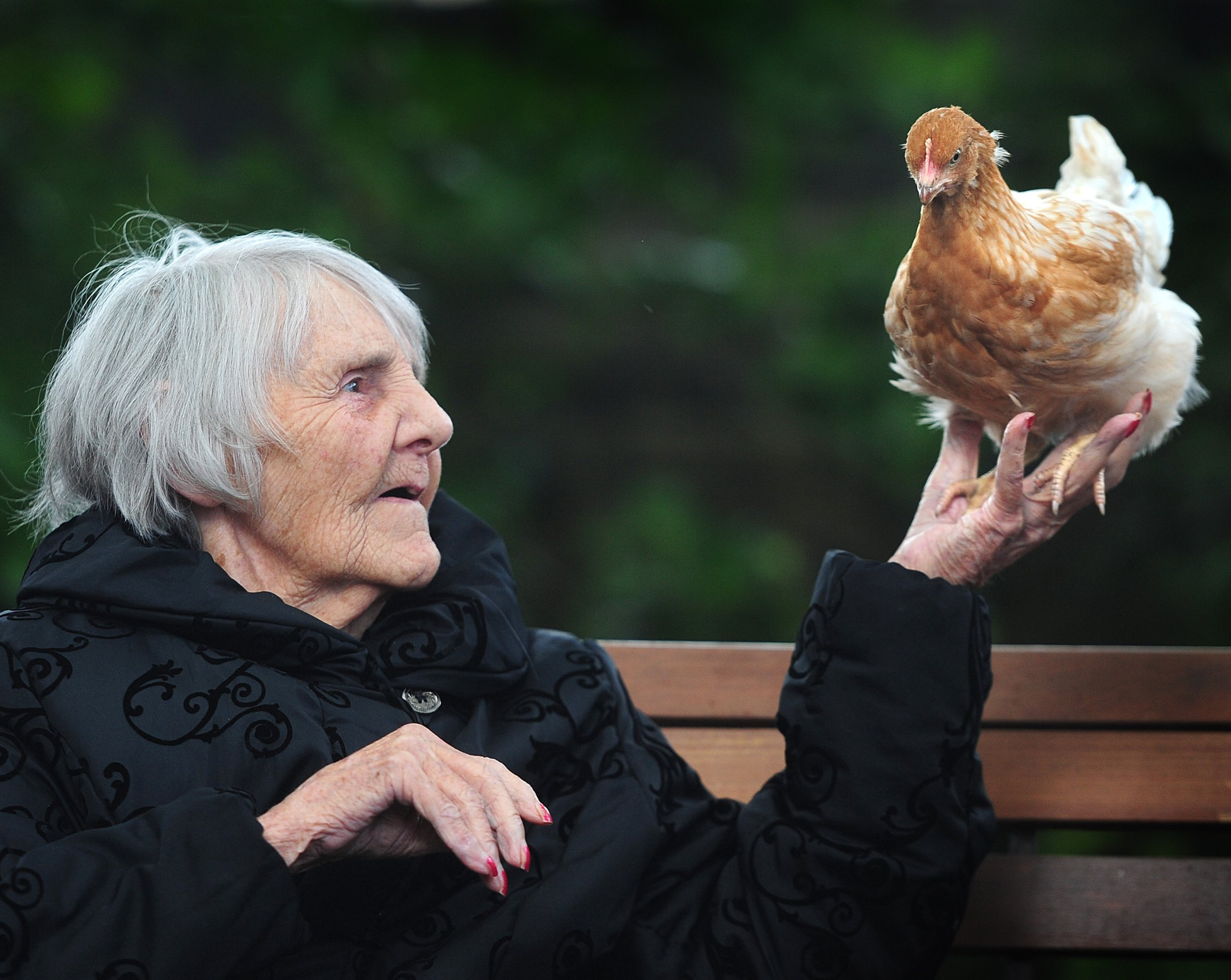 Resident Agnes with one of the chicks. Rosemary Care Home , Newhey Rd , Milnrow , Rochdale , United Kingdom. Elderly residents have been given chicks to stop them feeling lonely and depressed . 30 August 2018