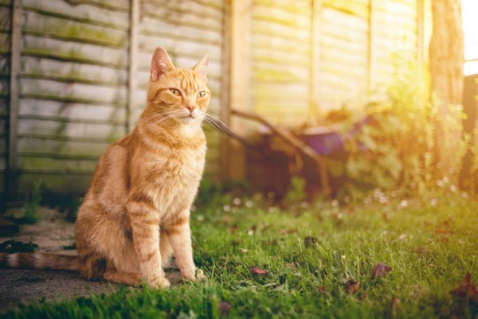 How to move house with your cat | Metro News