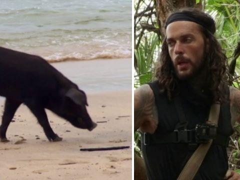 Celebrity Island viewers baffled as Pete Wicks befriends pig before burying it at sea when it hangs itself