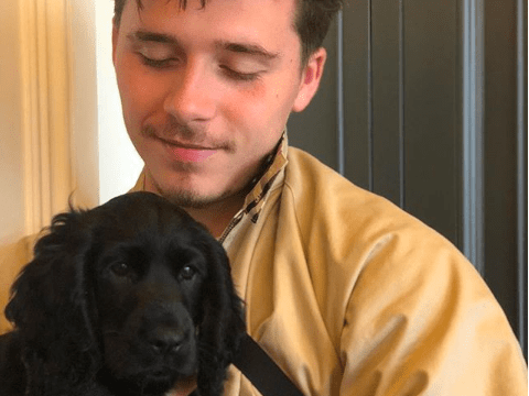 Brooklyn Beckham introduces new puppy Fig to the family just as Olive the dog makes her Vogue debut