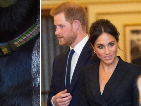 Prince Harry and Meghan Markle name their new dog Oz