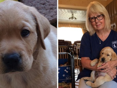Woman who delivers guide dogs as a puppy midwife has the best job in the world