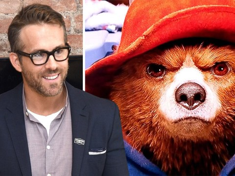 Welcome to 2018's most unlikely beef – Paddington the Bear vs Ryan Reynolds